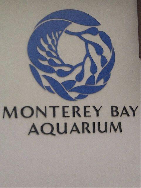 25 Best Ideas About Monterey Bay Aquarium On Pinterest