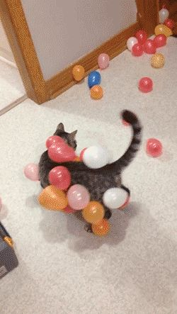 :))) Cat and balloons. GİF....
