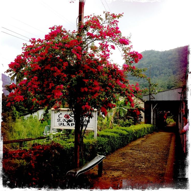 Train to Nuwara Eliya (Tea country)