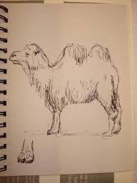 Afbeeldingsresultaat voor kameel tekenen