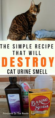 How to remove cat urine smell permanently. Simple recipe that works every single time using 3 ingredients you have at home already! Simply mix them up and spray the solution on the soiled spot and the smell will be gone! Works even if you previously used another cleaning solution on the stain!