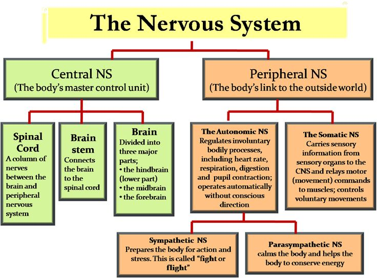 Science - 8th Grade: Central Nervous System & Peripheral Nervous System…