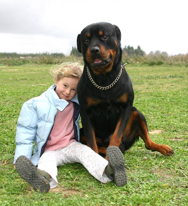 are rottweilers good pets