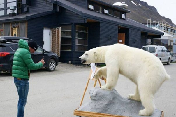 Perturbed neighbors of the arctic bears and scientists #ArcticBears, #NyAlesund, #Options, #Privacy