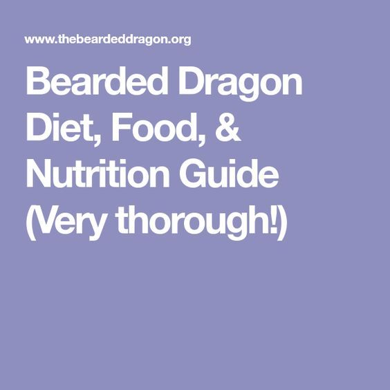Bearded Dragon Diet, Food, & Nutrition Guide (Very thorough!)