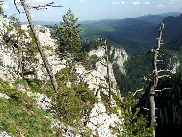 Bardos Rock - Bicaz Gorges, Transylvania