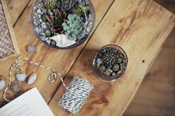 Jak zrobić terrarium na kaktusy i inne sukulenty? | Moje imponderabilia