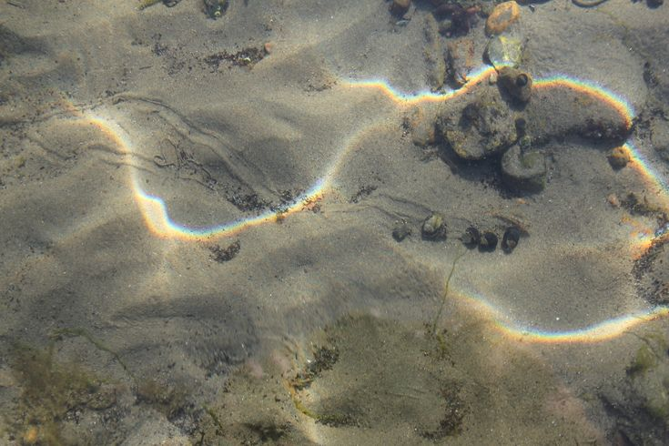 """Picture from down under the water Oslofjorden October 2014. Please see the """"roads"""" that the snails made."""