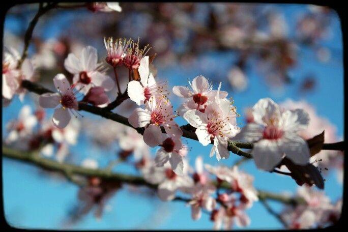 Amo il caldo del sole e il vento ancora freddo sulla pelle ... Amo gli alberi in fiore, il colore dei fiori, l'azzurro del cielo...