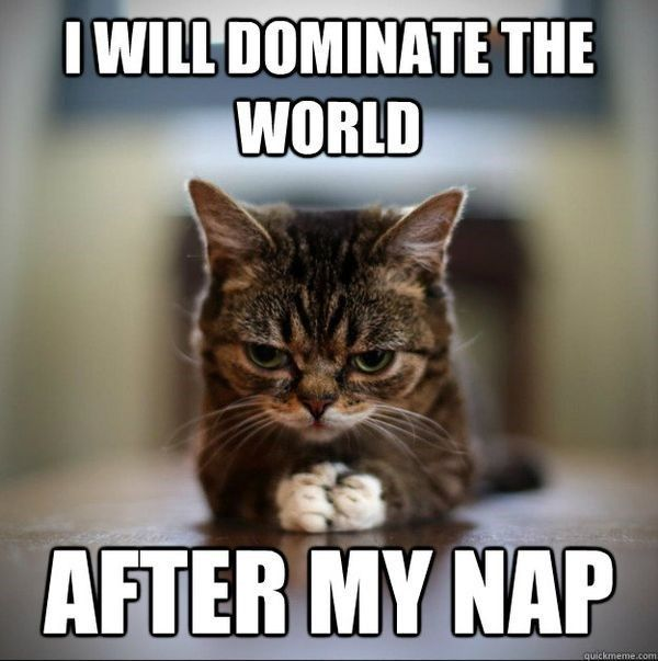21 Animals Who Really Need Their Nap Right Now Memes Funny Cat Pictures Funny Animals Funny Animal Jokes