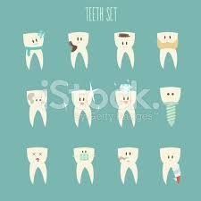 Resultado de imagem para tooth illustration