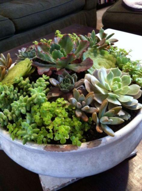 Idéias maravilhosas para jardins internos de suculentas 170   – Succulents