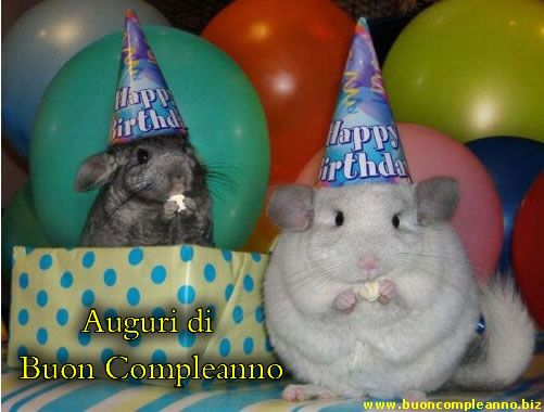 sinceri-auguri-di-buon-compleanno.jpg (501×380)