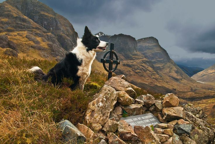 Glencoe...the dogs name is Skye. Love this pic! We had 2 Border Collies on the farm when I was growing up.