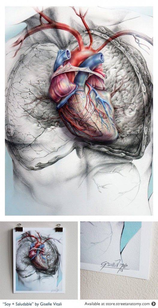 73 best anatomical heart images on Pinterest   Anatomical heart ...