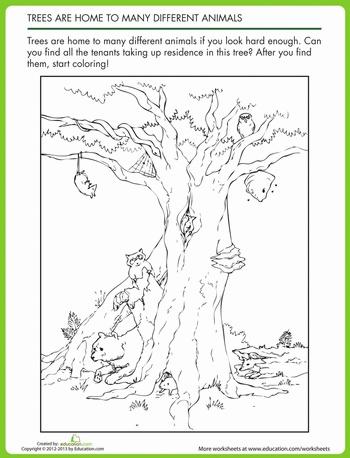 animal homes in trees animal worksheets animal house. Black Bedroom Furniture Sets. Home Design Ideas