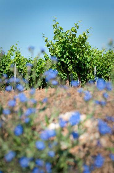 Magnifique paysage autour des vignes. Chaleur et couleurs au rendez-vous !