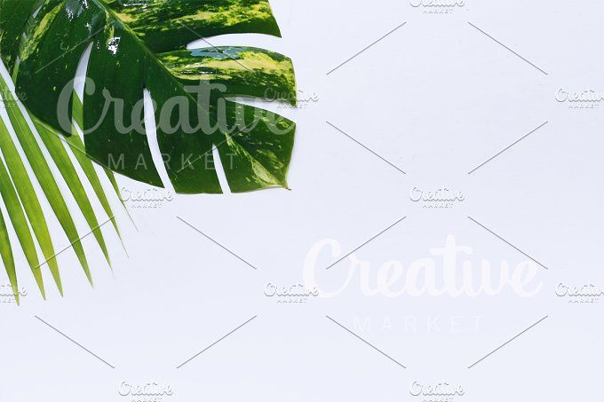 Palm leaves on white background by Trefilova Anna on @creativemarket