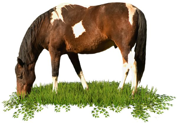 лошадь, обои для рабочего стола, фон