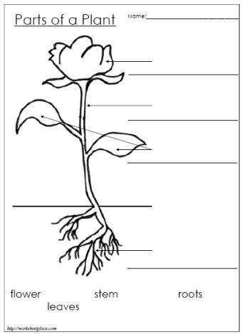 Label the Parts of a Plant:   Plants worksheets, Plant ...