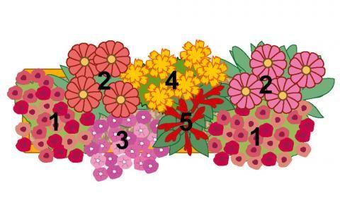 Pflanzidee Blumenkasten Tempramentvoller Blütenmix