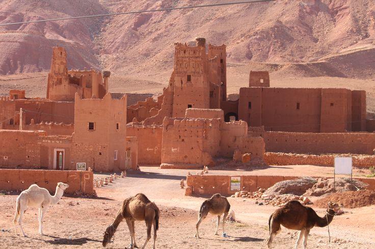 At the edge of the Sahara Desert