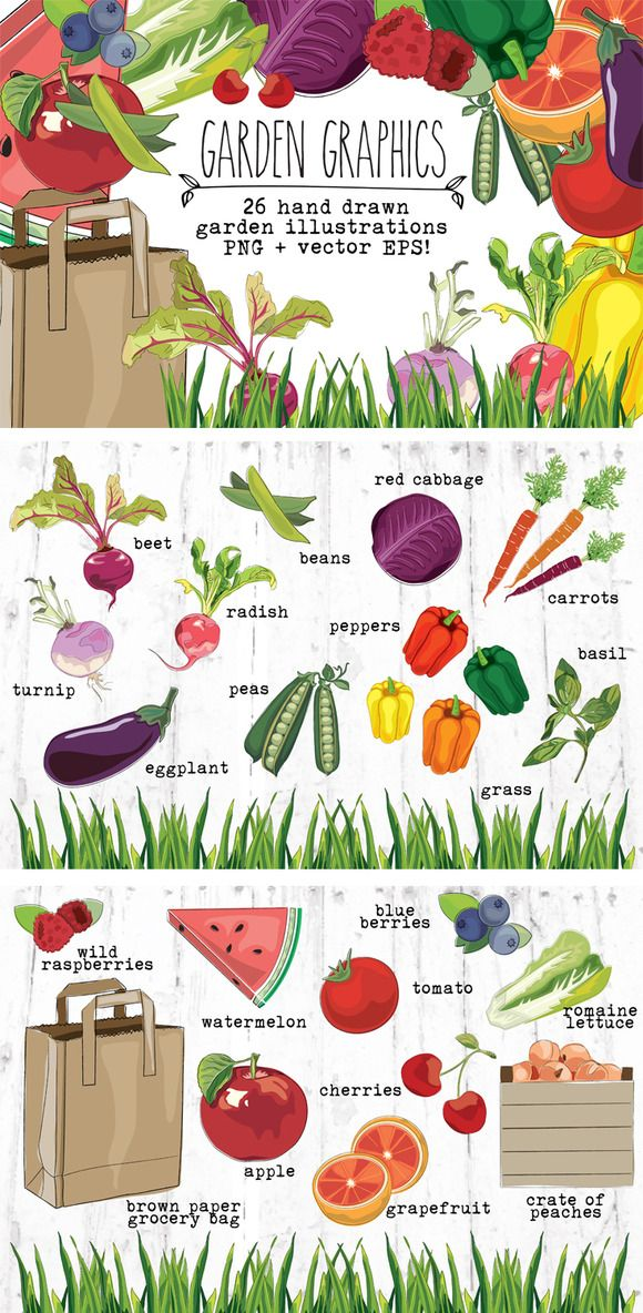 Garden Fruits And Vegetables Hand Drawn Clip Art