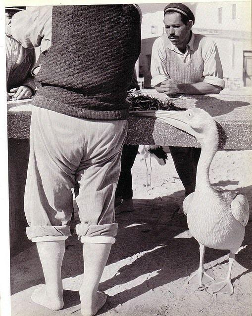 Μύκονος, ο Πέτρος, 1950's, φωτογρ. Paul C. Pet