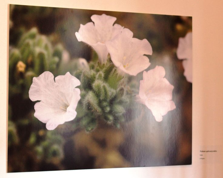 Se puede apreciar directamente en la Sala de Arte Collahuasi de Iquique.