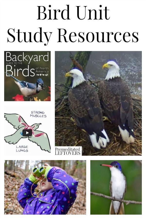 Bird Unit Study Resources including bird lesson plans, online videos about birds, books about birds, bird lap-books and other online bird resources.
