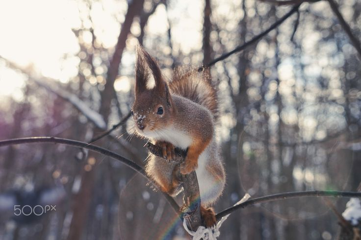 I see you - Squirrel in the Neskuchny Garden, Moscow, Russia