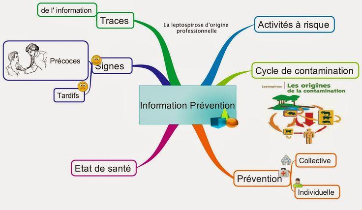 Information à propos de la prévention de la leptospirose d'origine professionnelle, ne rien oublier en 6 thématiques