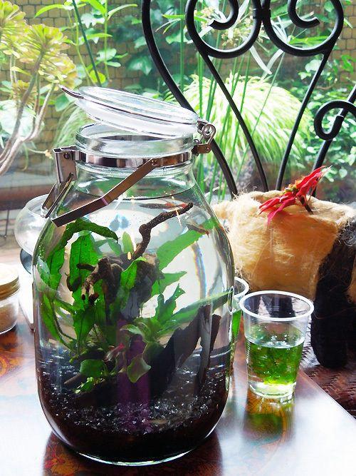 ボトルアクア:4Lの梅酒瓶で   acryl