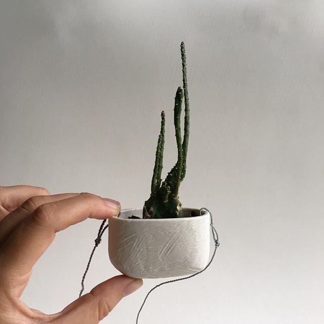 Tiny Limoges porcelain hanging planter, very very tiny. / pequeña maceta colgante de porcelana de Limoges que me traje de Barcelona y que gracias @vickygortari encontró su 🌵gracias ! #agceramica #planter #ceramica #ceramics #ceramique #ceramicart #porcelain #limoges #petit #tiny #art #design #arte #diseño #porcelana #cactus
