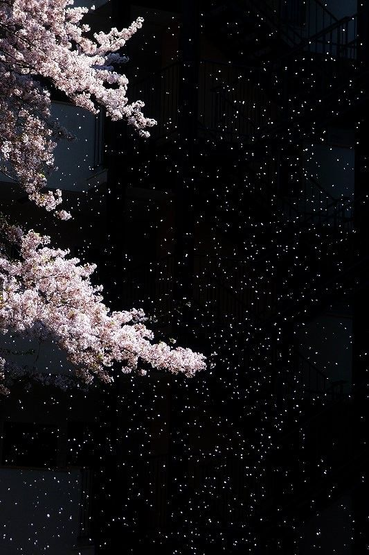 Blossoms against the night sky.