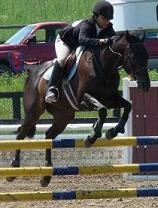 Talented Trillium Jumper Mare - Lease  Vanity Affair aka as Annie, is a beyond talented!18 year old :Appendix Mare for Full Lease.Annie