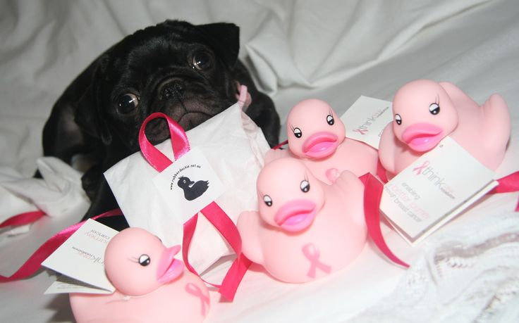 Matilda and the Think Pink Duckies #pug #duck
