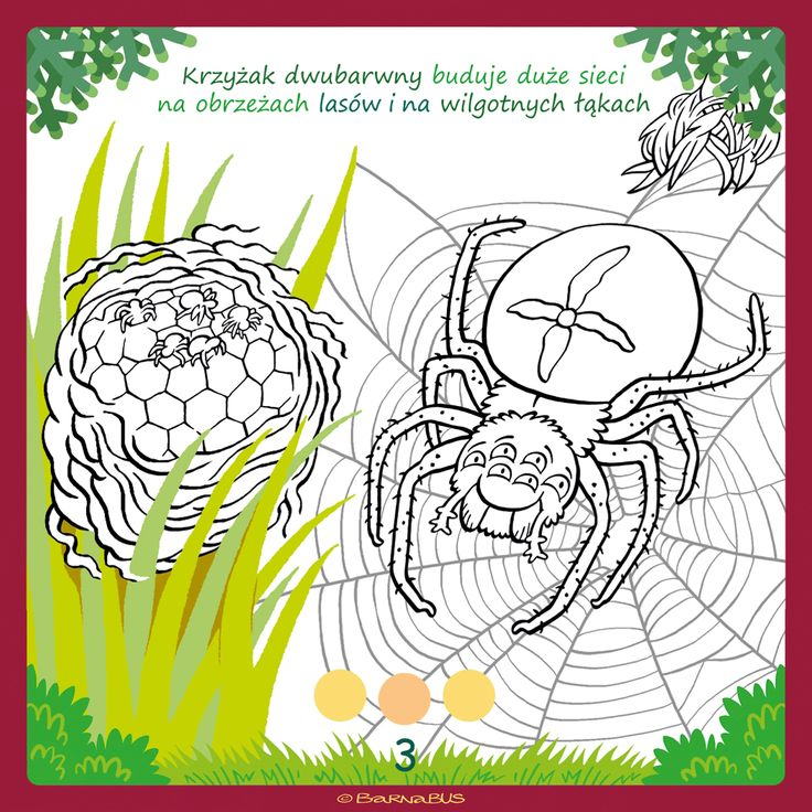 © Barnabus - #Kolorowanka Domy zwierząt ▪ Coloring book The Houses of #Animals - #Spider builds a net - page 03.
