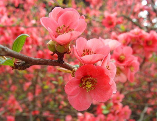 Equinozio di primavera - Spring Equinox | Flickr - Photo Sharing!