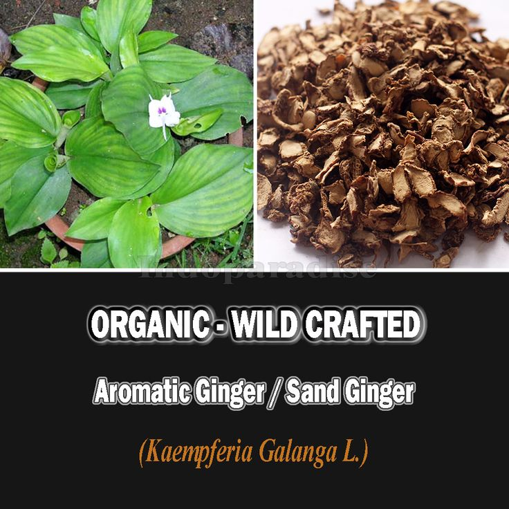 Colds, Eliminating bad blood, inflammation of the stomach, sprain, heartburn stomach, cough, diarrhea, Anti cancer, digestion, Cooking spices, Good for the skin, inflammation of the intestine, in need of bacteria in the gut, Blood circulation, Get rid of toxins in the body, Anti-oxidants, Source of fiber #aromaticginger #driedherbs #herbalremedies