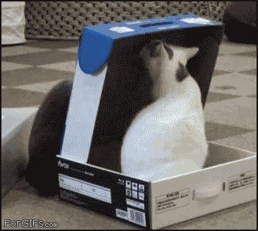 #win #cat
