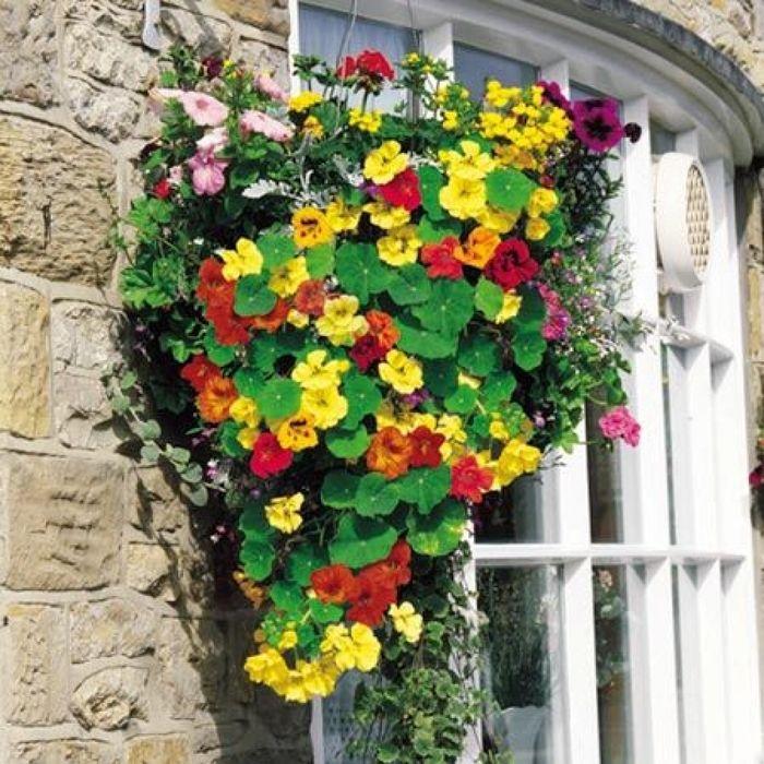 5 роскошных видов цветов для украшения балкона – Вдохновение