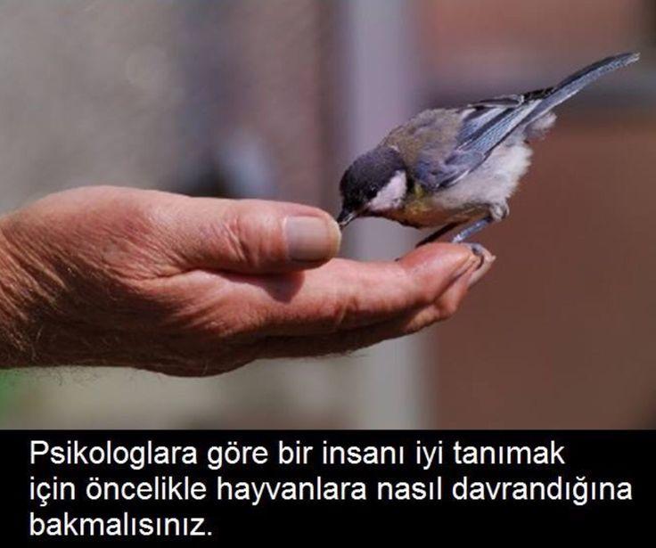 Bir insanı iyi tanımak için önce hayvanlara nasıl davrandığına bakmalısınız