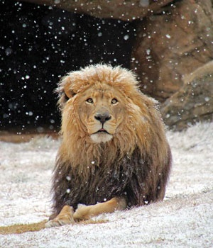 Snow at the Joburg Zoo - not something we see everyday!