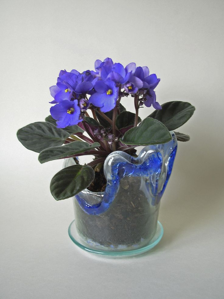A glass flower pot with violet