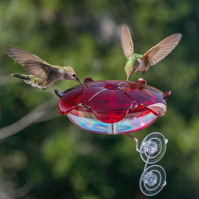 Droll Yankee Ruby Sipper Window Feeder: Hummingbirds can be enchanting and will often visit a feeder with fresh nectar. That's why this small dish feeder is such an excellent choice. There's less surface area to clean, so you can maintain an hygienic feeder with a constant supply of fresh nectar.