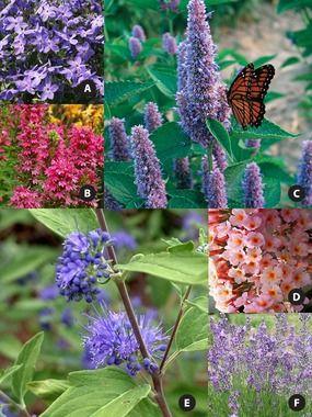 147 Best Butterfly Garden Ideas Images On Pinterest 640 x 480