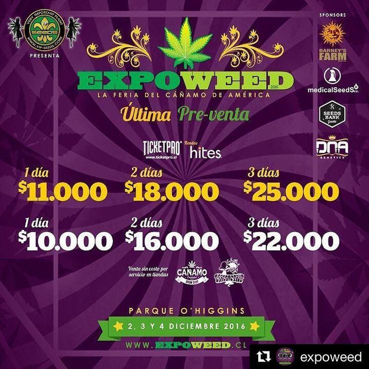 Come see us @expoweed with @en_vola #Repost  AHORA ES CUANDO!  Vuelen por sus entradas amig@s! Ya comenzó la Última Pre-Venta  Blaze your own trail. #piecemakergear.com #piecemaker #blazeyourowntrail #byot #expoweed #puentealto #chile #santiago #vivachile #instachile #buenosdias #marihuana #marijuana #bong #420 #stoner #headshop #moderntrail #siliconebong #adventureanywhere #weedstagram #uruguay #hightimes #dopecup #bigindustryshow #montevideo  #champstradeshow  @en_vola @quema_smokeshop…