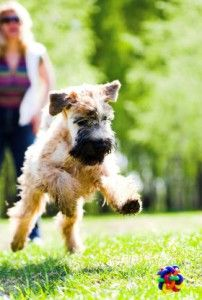 The Best Flea and Tick Medicine for Dogs and Cats