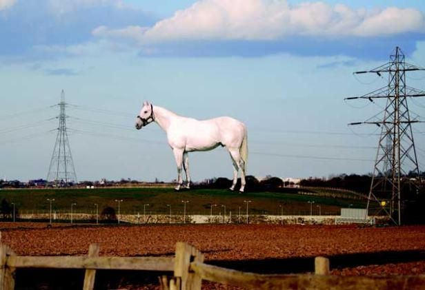Angel of the South statue of a white thoroughbred horse in Springhead, Ebbsfleet Valley, Kent.
